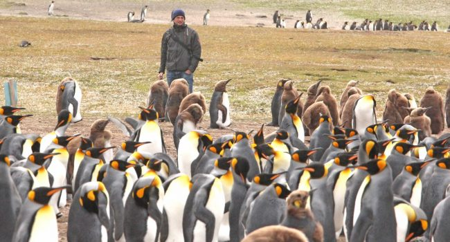 No signs of Gentoo recovery in Conservation seabird summary