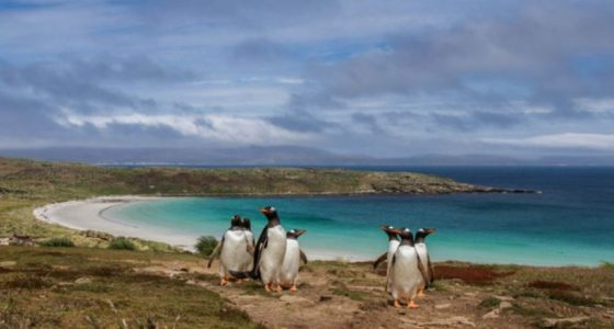 Falkland Islands State of the Environment 2020 report released