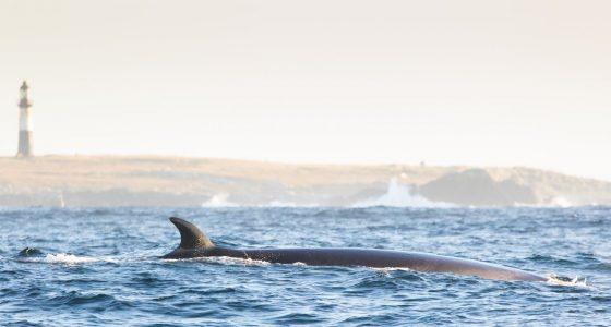An International First for Sei Whales